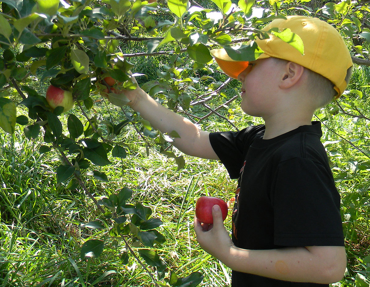 Carver County Apple Orchards