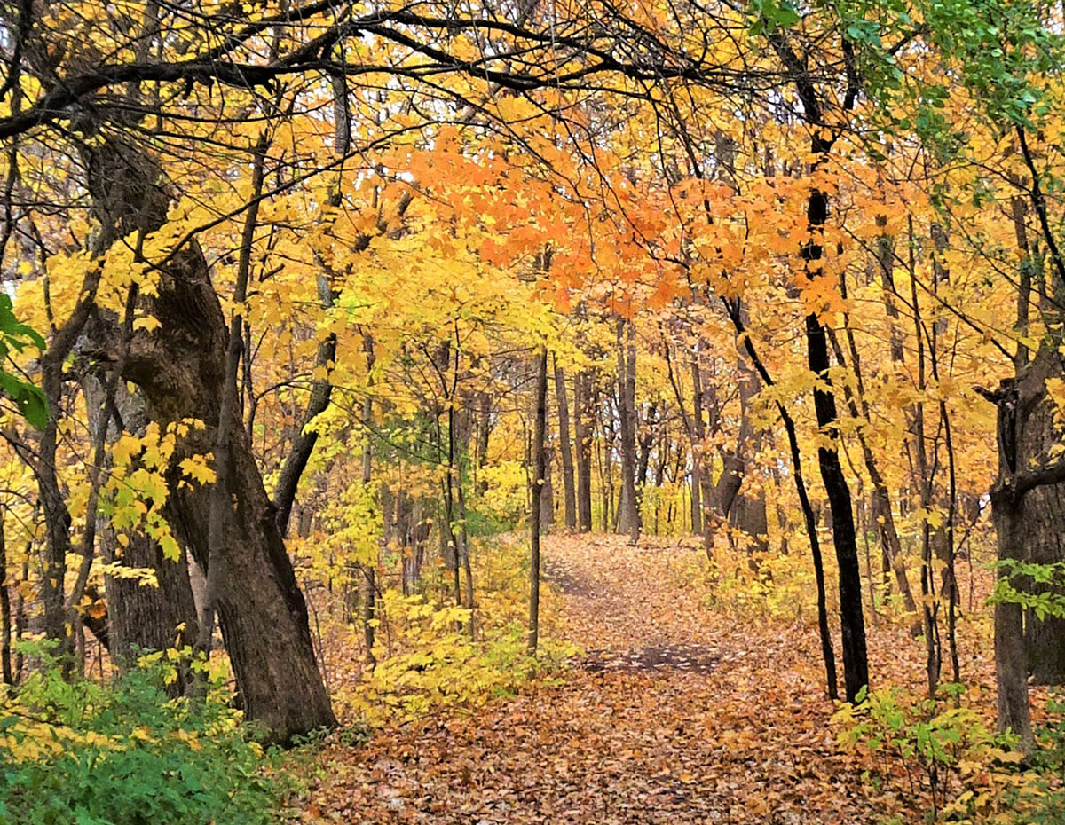 Carver County Fall trails